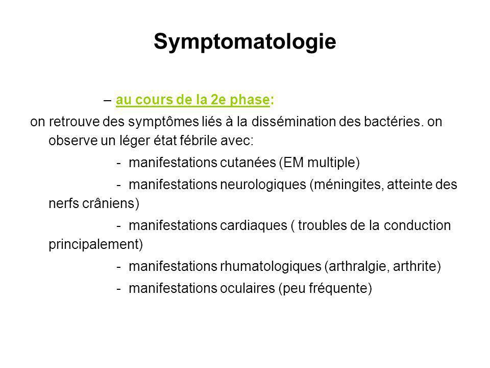 Symptomatologie –au cours de la 2e phase: on retrouve des symptômes liés à la dissémination des bactéries. on observe un léger état fébrile avec: - ma