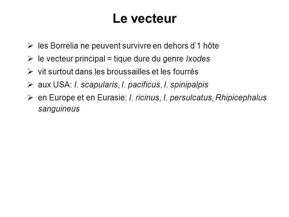 Le vecteur les Borrelia ne peuvent survivre en dehors d1 hôte le vecteur principal = tique dure du genre Ixodes vit surtout dans les broussailles et l