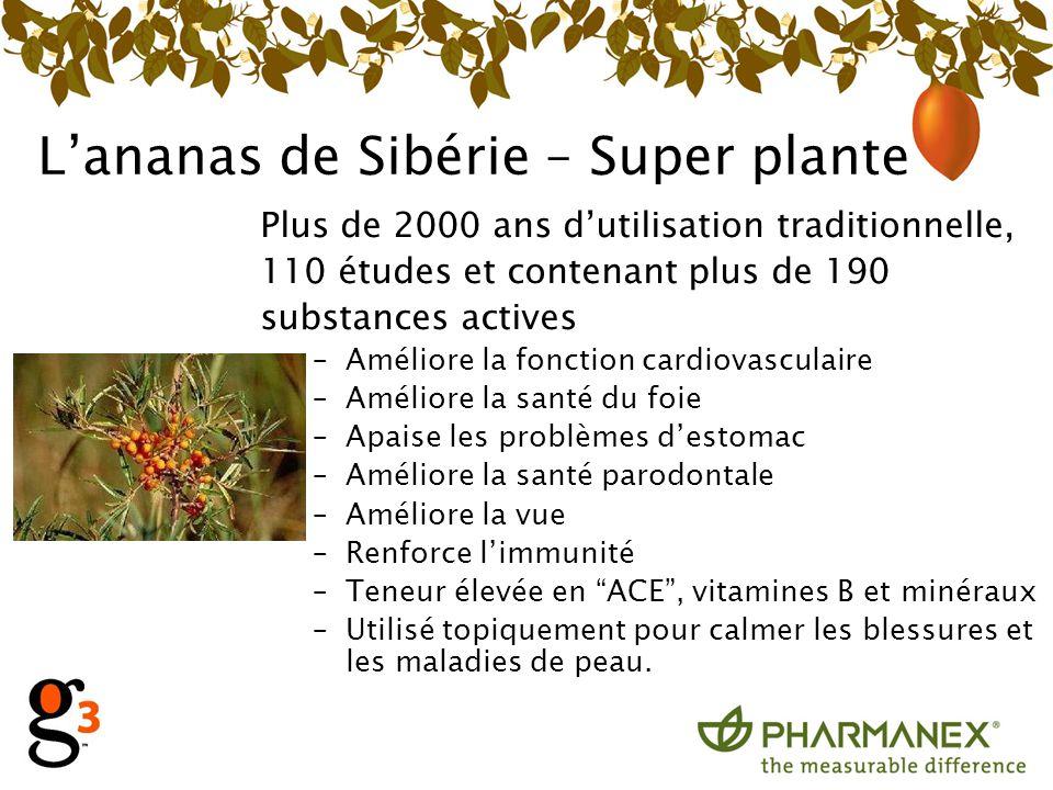 Lananas de Sibérie – Super plante Plus de 2000 ans dutilisation traditionnelle, 110 études et contenant plus de 190 substances actives –Améliore la fo