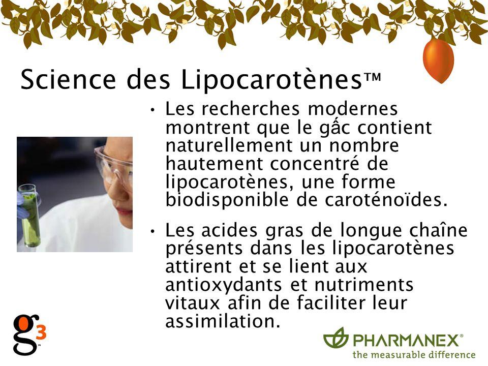 Science des Lipocarotènes Les recherches modernes montrent que le g c contient naturellement un nombre hautement concentré de lipocarotènes, une forme