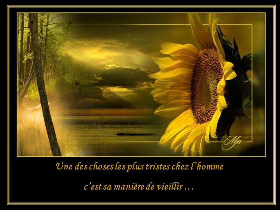 Des fleurs meurent chaque jour mais où va leur parfum?