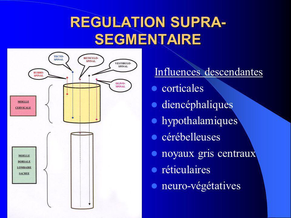 REGULATION SUPRA- SEGMENTAIRE Influences de toutes les voies véhiculées par les grand cordons médullaires: voies ascendantes voies descendantes