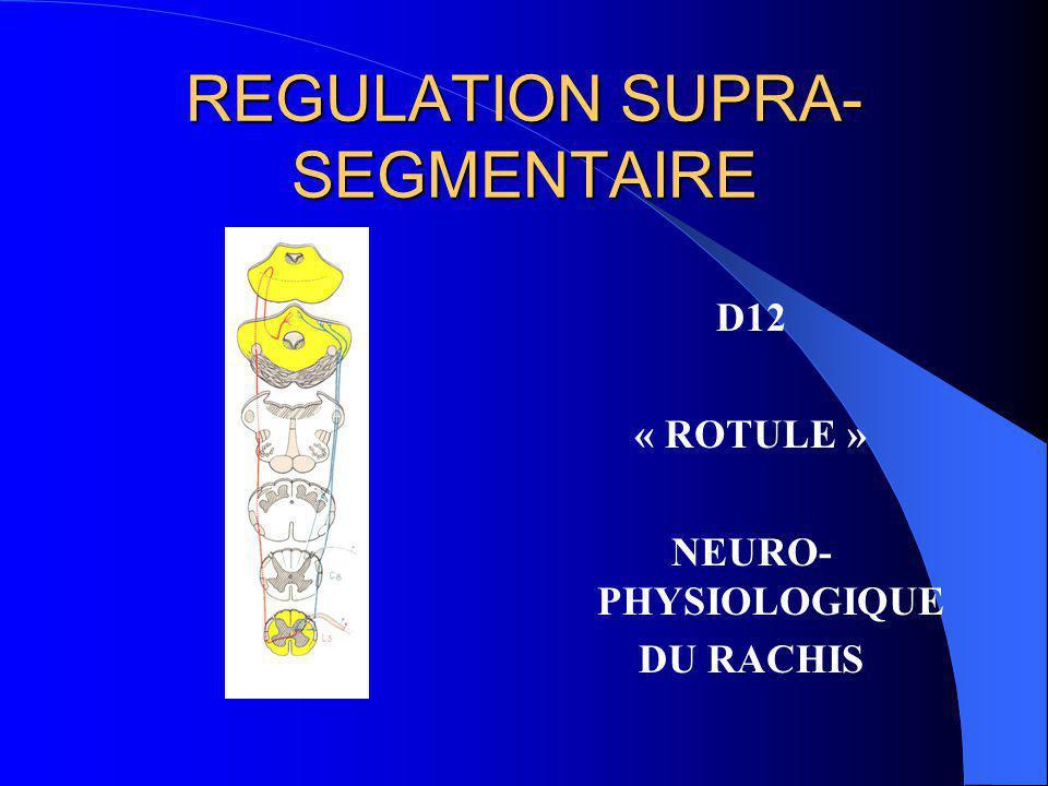 REGULATION SUPRA- SEGMENTAIRE faisceau de Flechsig direct HOMONYME faisceau de Gowers croisé HETERONYME
