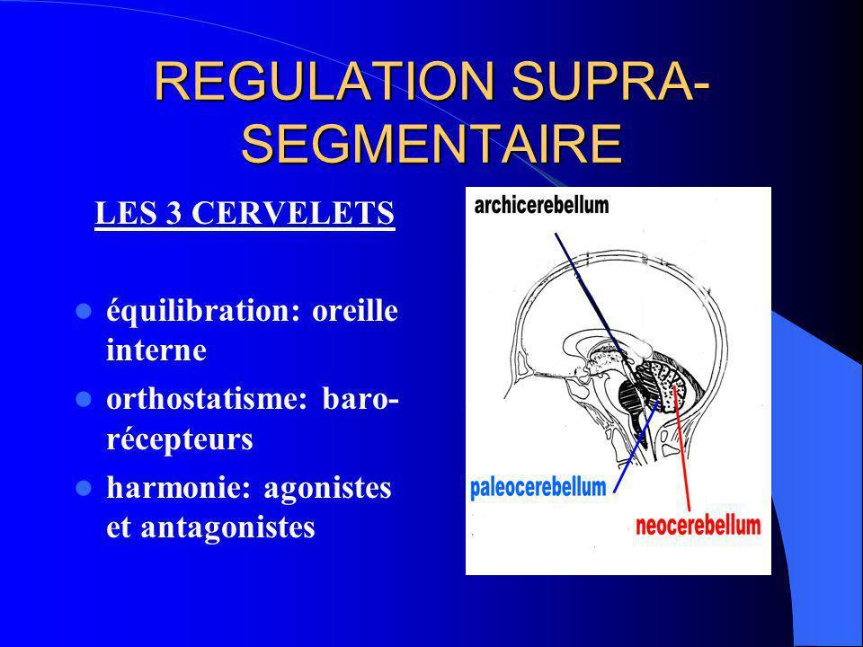 INTERFERENCES AU NIVEAU SEGMENTAIRE NERF SINU-VERTEBRAL branche ant: SNV périphérique Branche post SNV « central »