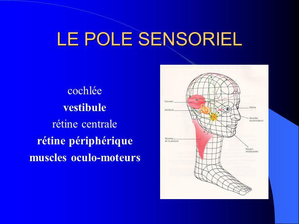 REGULATION SUPRA- SEGMENTAIRE LES 3 CERVELETS équilibration: oreille interne orthostatisme: baro- récepteurs harmonie: agonistes et antagonistes