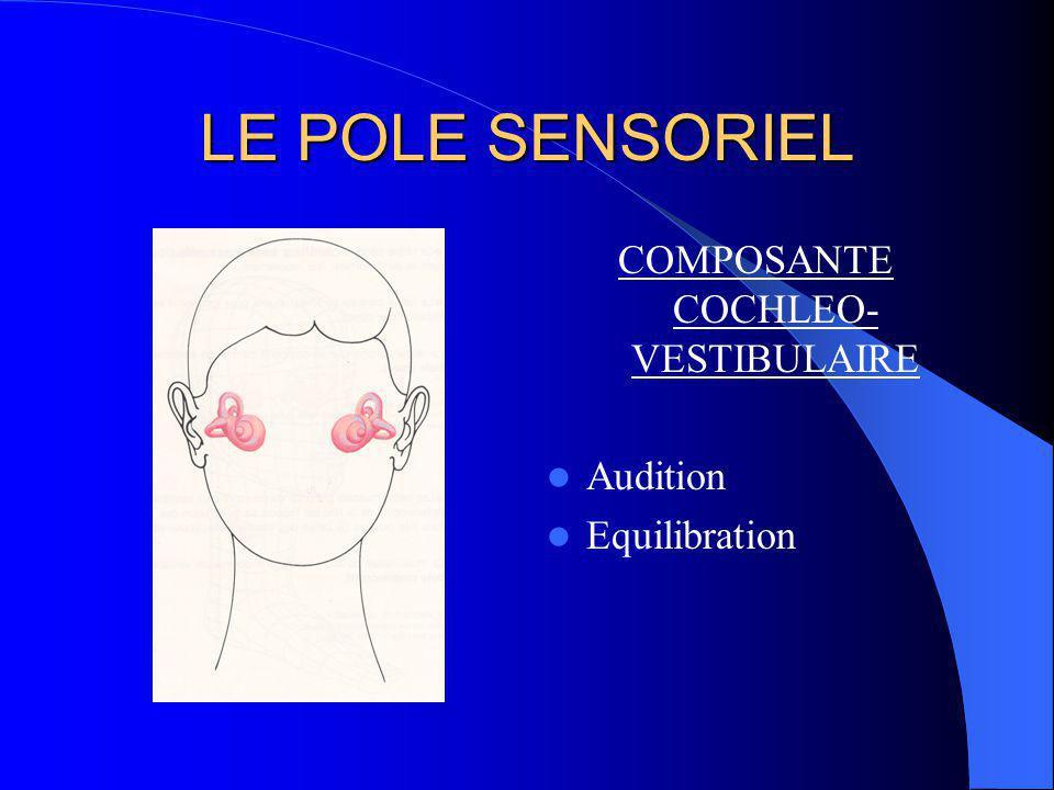 LE POLE SENSORIEL cochlée vestibule rétine centrale rétine périphérique muscles oculo-moteurs