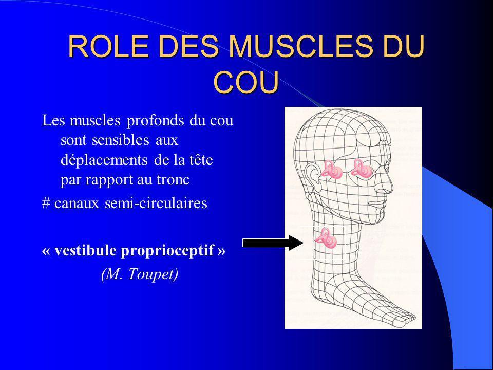 EQUILIBRATION MULTISENSORIELLE Gérée par le tronc cérébral: formation réticulée, noyaux vestibulaires archéo-cervelet 3 types dinformations vestibulaires, visuelles et proprioceptives