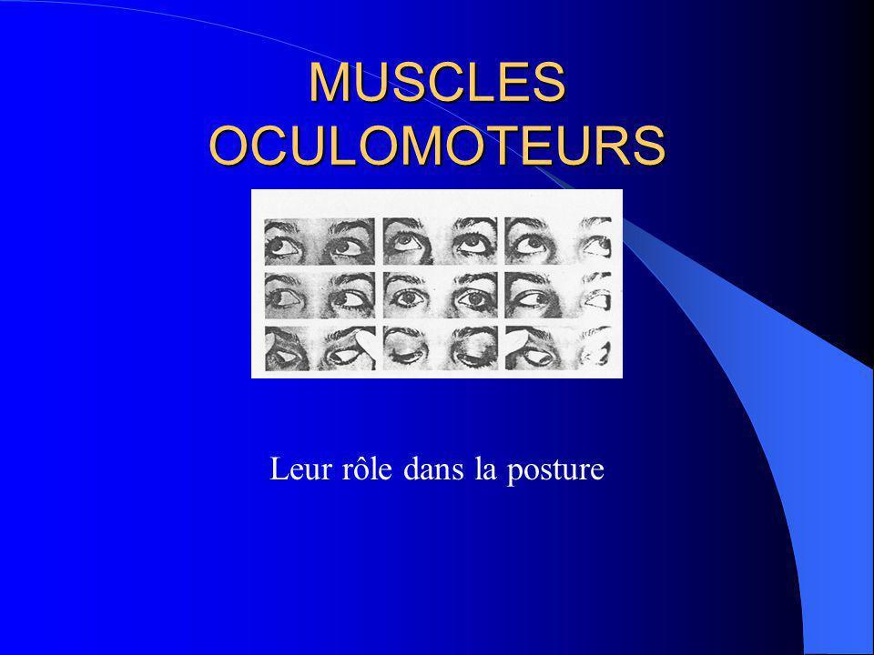 EQUILIBRATION MULTISENSORIELLE Organes récepteurs vestibule, rétine périph.