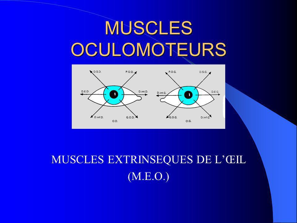 MUSCLES OCULOMOTEURS Leur rôle dans la posture