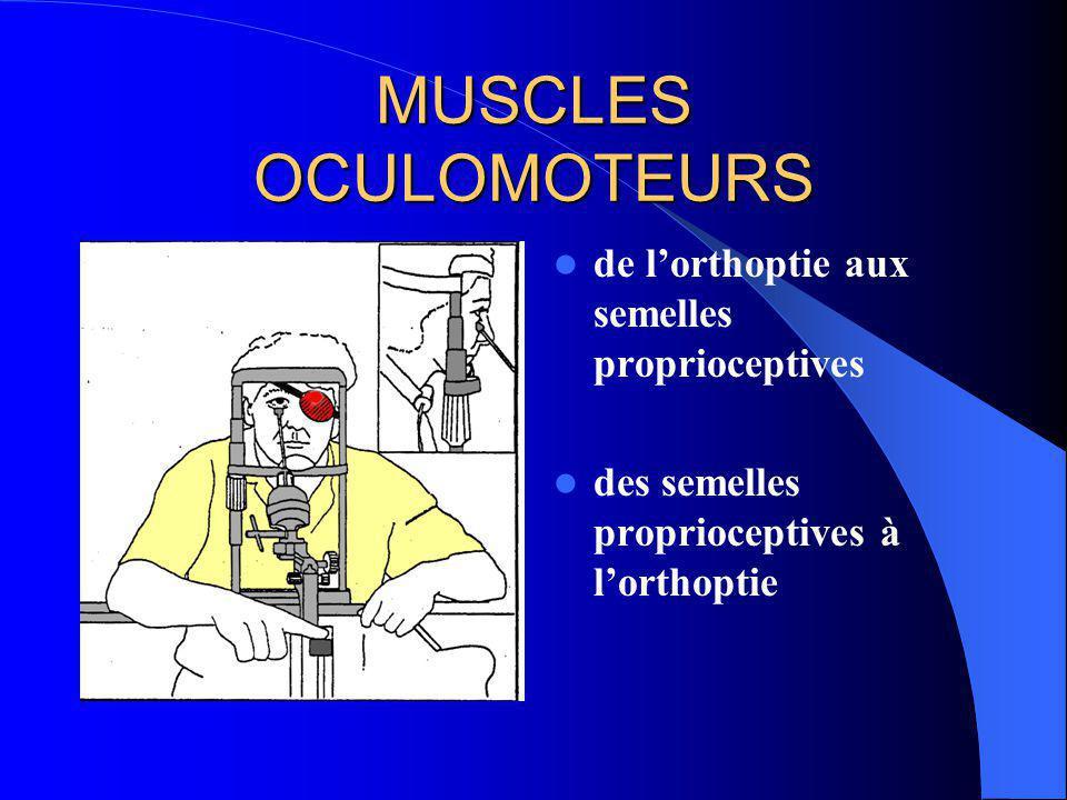 MUSCLES OCULOMOTEURS MUSCLES EXTRINSEQUES DE LŒIL (M.E.O.)