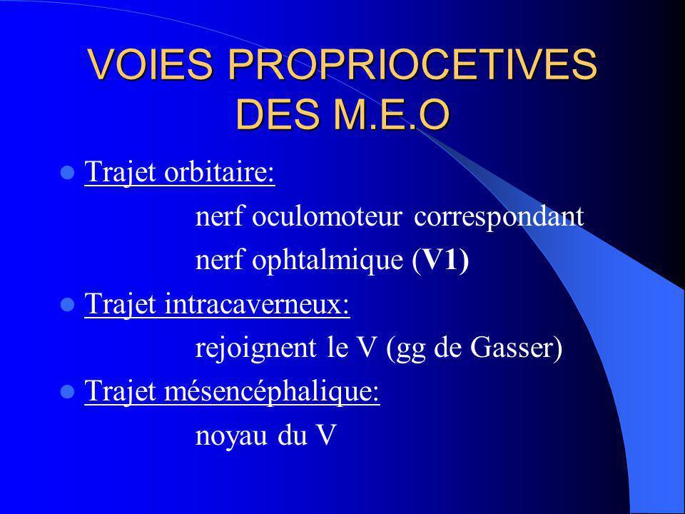 INNERVATION DES M.E.O.