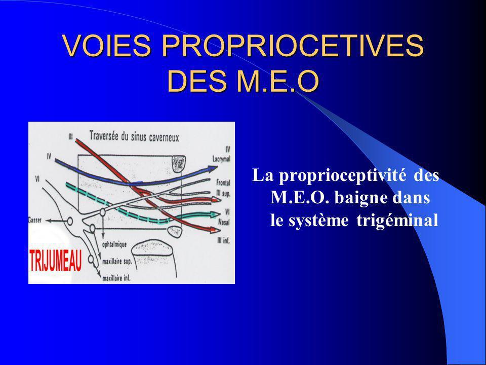 VOIES PROPRIOCETIVES DES M.E.O Trajet orbitaire: nerf oculomoteur correspondant nerf ophtalmique (V1) Trajet intracaverneux: rejoignent le V (gg de Gasser) Trajet mésencéphalique: noyau du V