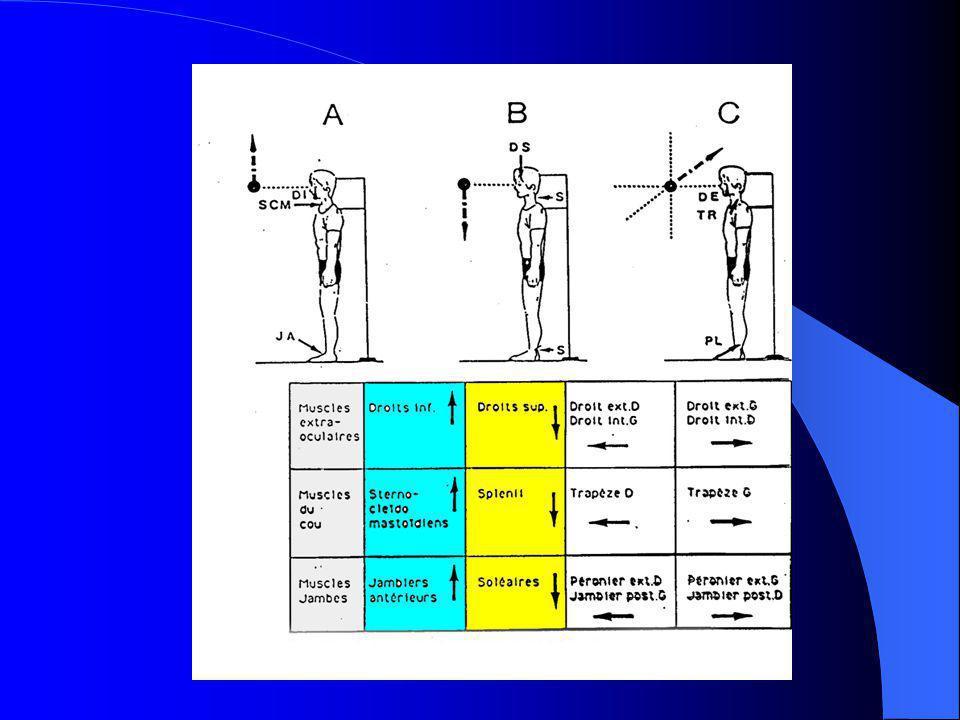 M.E.O.et chaînes musculaires La thèse de Pierre Larmande: « œil et cervelet » Les travaux de J.P.