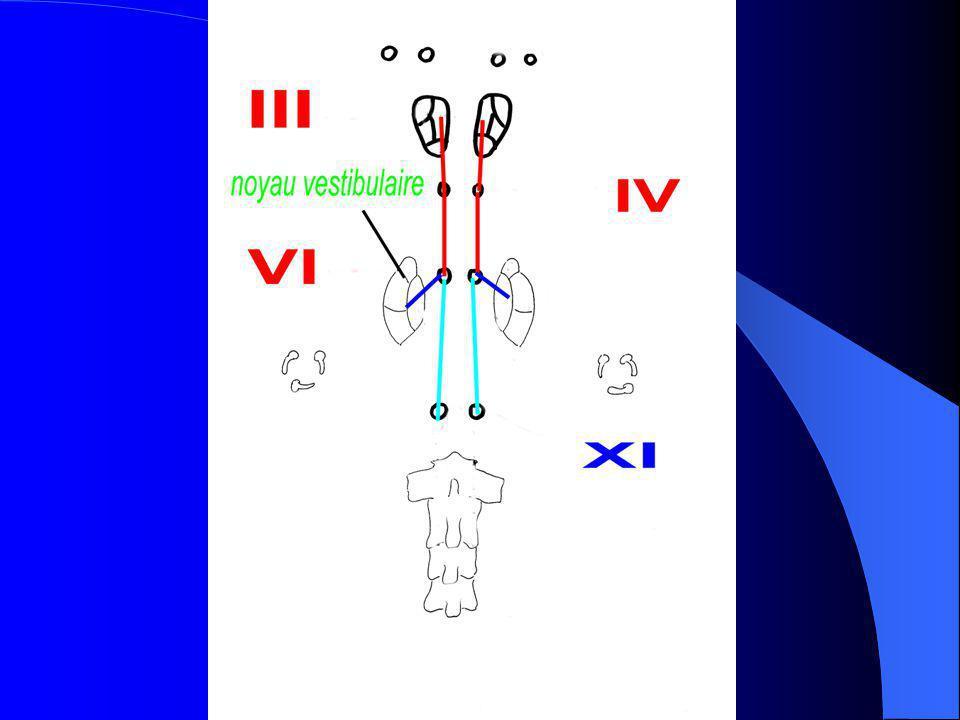 Oculo-céphalogyrie