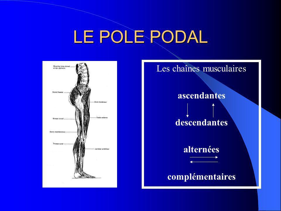 LE POLE PODAL Lorthostatisme ostéo- ligamentaire pur est impossible à cause: de linclinaison tibiale des mouvements respiratoires