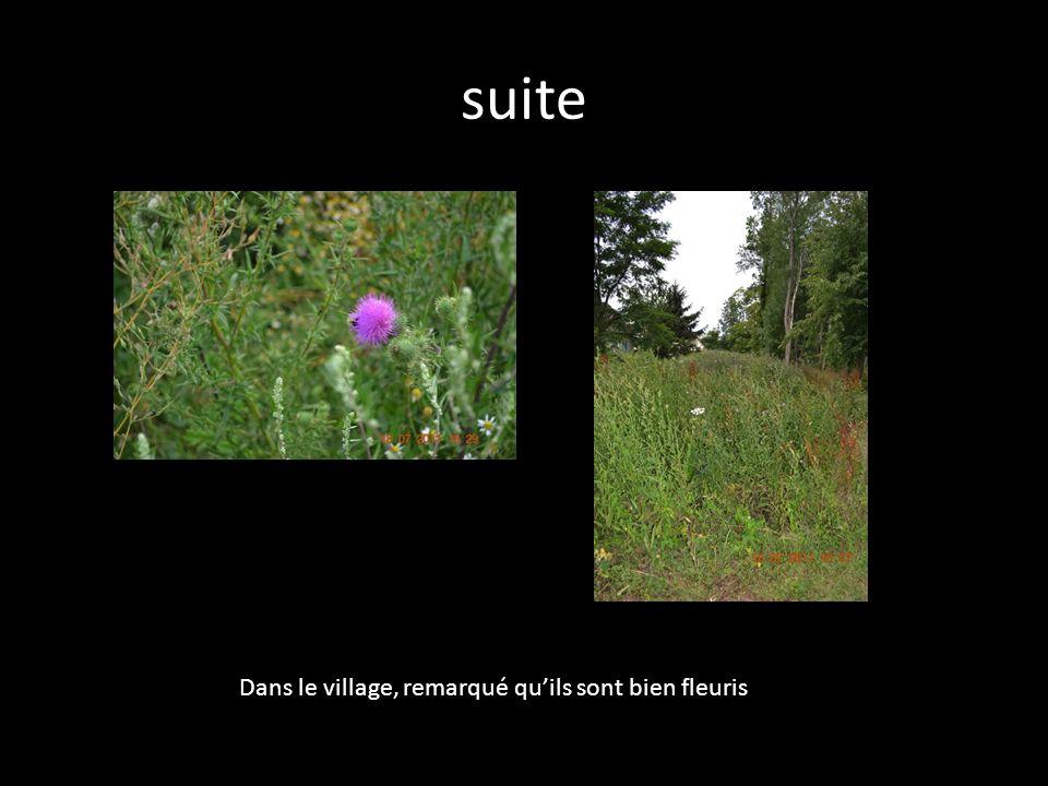 suite Dans le village, remarqué quils sont bien fleuris