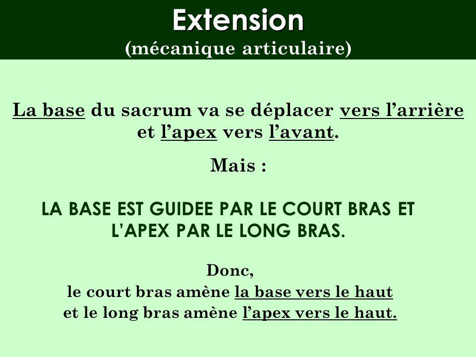 Point important Dans la flexion-extension, il faut considérer la mobilité du sacrum en deux parties : la base au dessus de laxe lapex en dessous de la