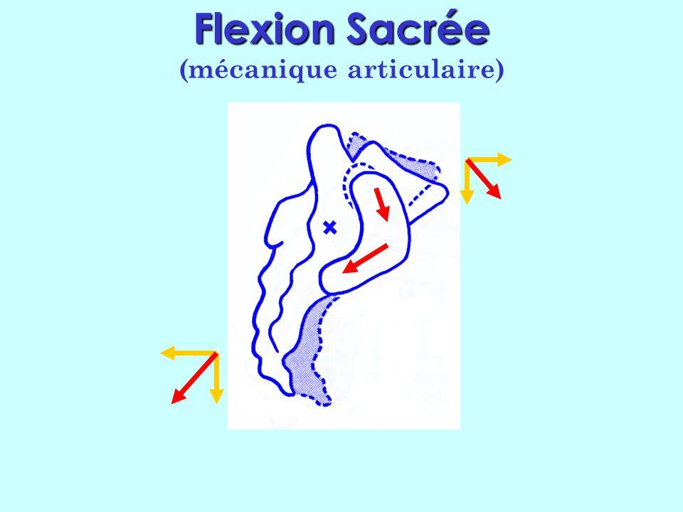 Flexion Flexion (suite) Donc en flexion du sacrum : La base va en bas et en avant Lapex va en bas et en arrière Donc rotation vers lavant, mais aussi