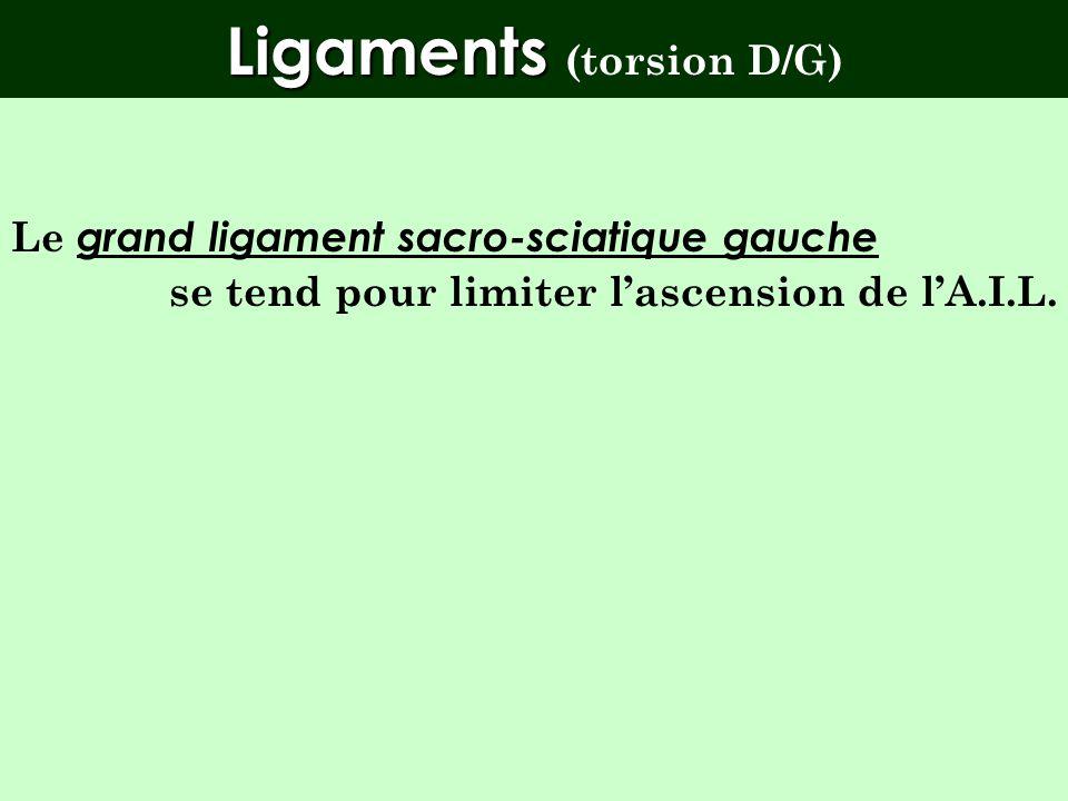 Torsion D/G NSdRg L5 FRSg