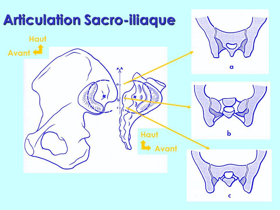 Axe Laxe de mobilité du sacrum en flexion- extension est un axe horizontal, dans un plan frontal, passant par les deux surfaces articulaires et en par