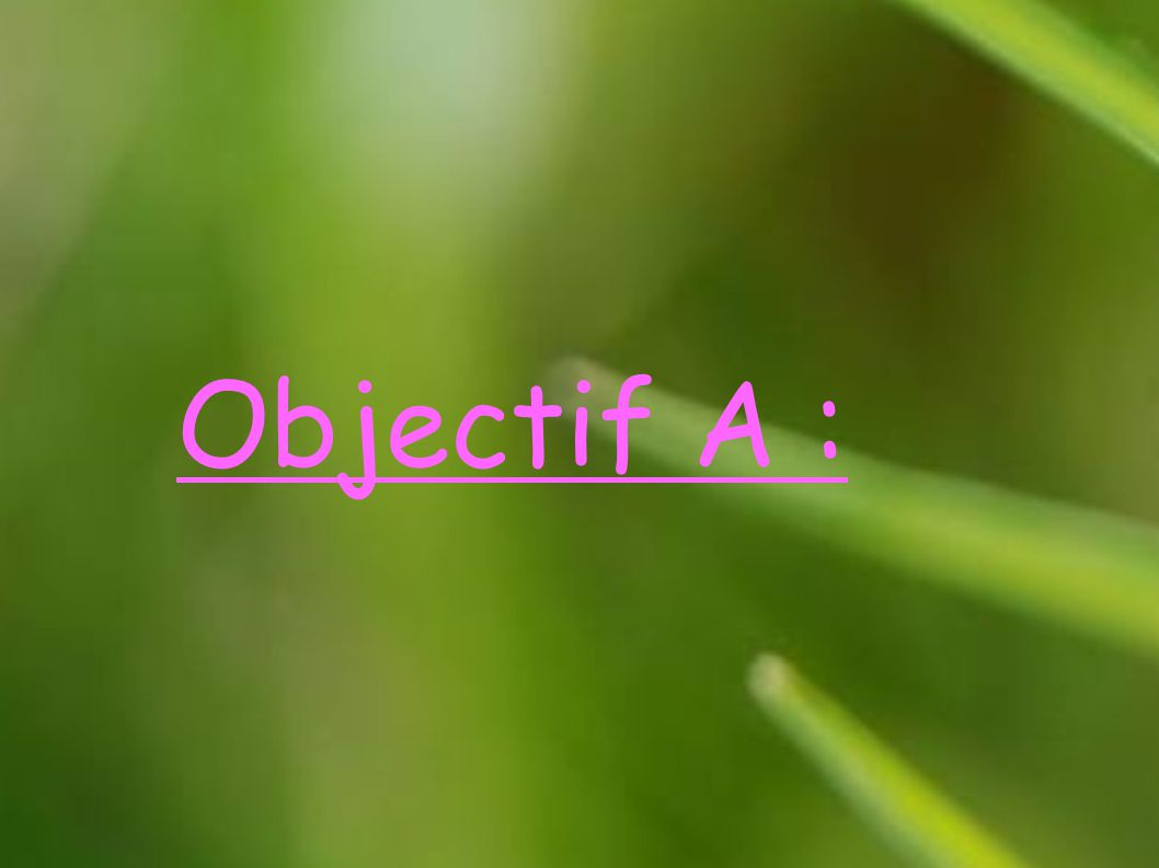 Objectif A :