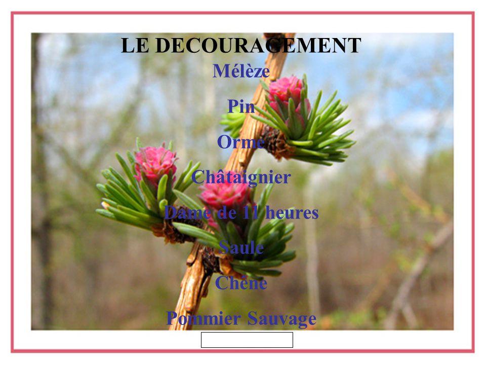 LE DECOURAGEMENT Mélèze Pin Orme Châtaignier Dame de 11 heures Saule Chêne Pommier Sauvage