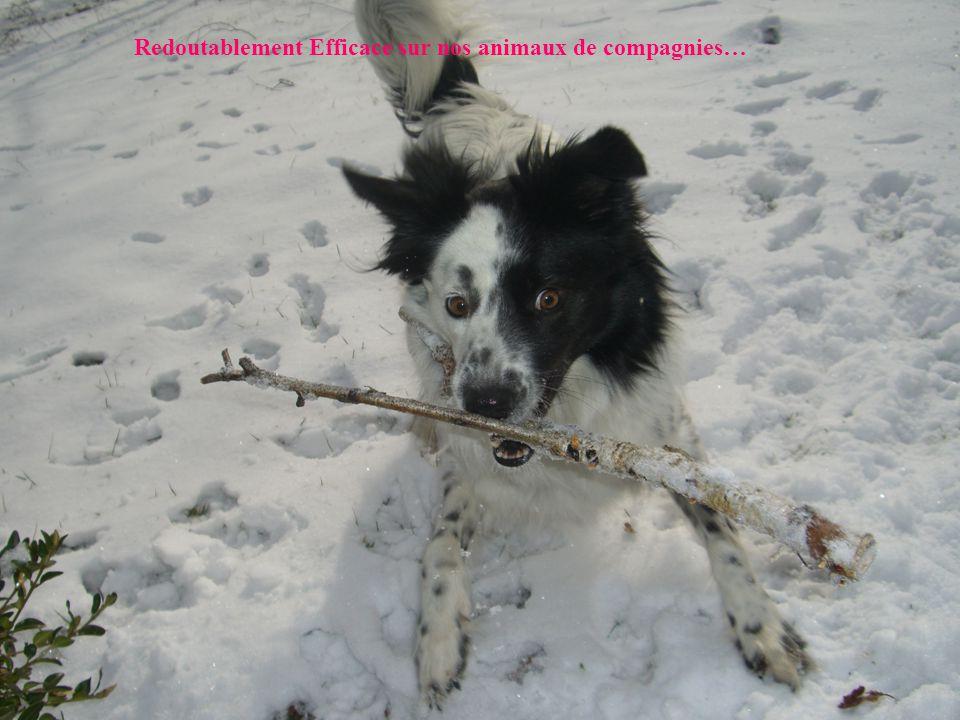Redoutablement Efficace sur nos animaux de compagnies…