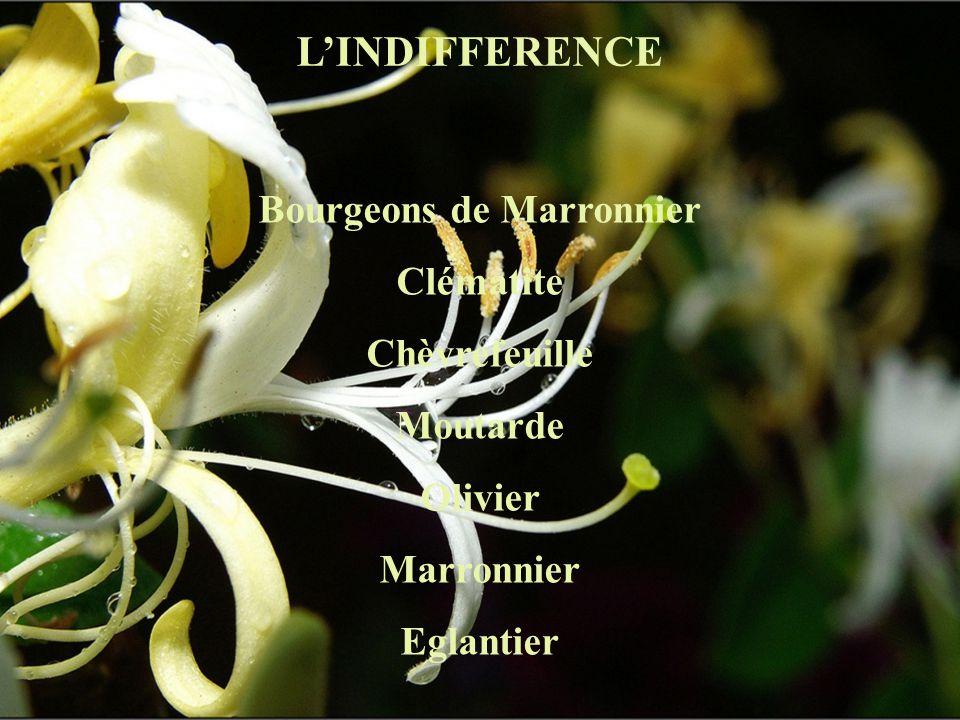 LINDIFFERENCE Bourgeons de Marronnier Clématite Chèvrefeuille Moutarde Olivier Marronnier Eglantier