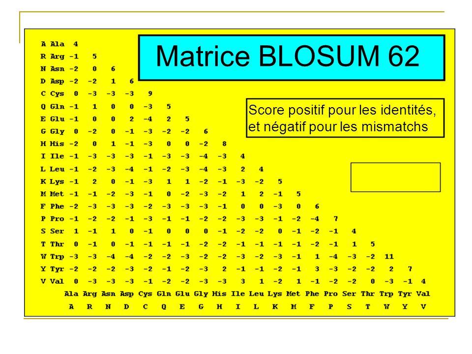 Matrice BLOSUM 62 Score positif pour les identités, et négatif pour les mismatchs
