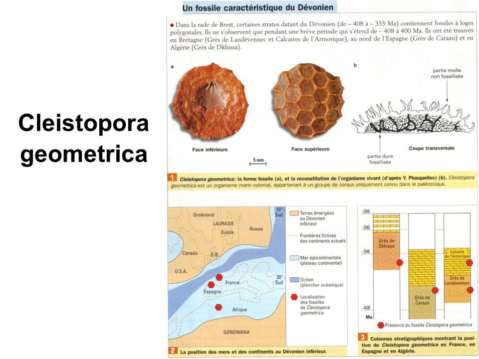 Le principe d identité paléontologique En fonction des fossiles contenus dans une strate, et en faisant référence à une série sédimentaire choisie et datée, on peut déterminer l âge relatif d une strate ou d une roche.