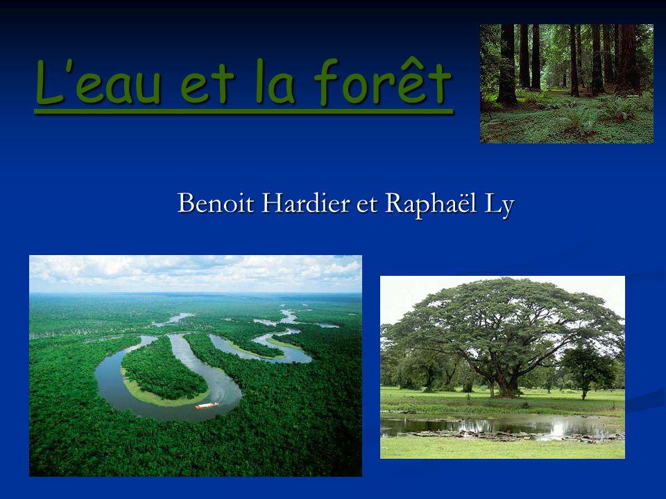 Résoudre la désertification La désertification est un problème majeur causé par la déforestation, la mauvaise gestion de leau et lagriculture intensive.