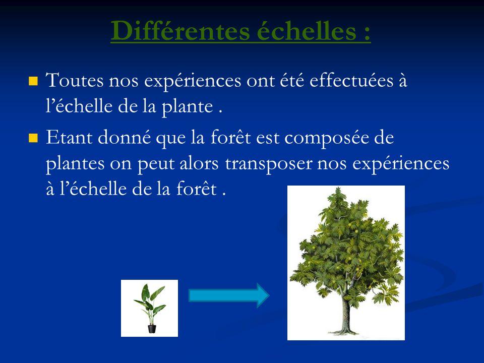 Leau un constituant essentielle de la forêt Les plantes sont constituées majoritairement Les plantes sont constituées majoritairement deau.