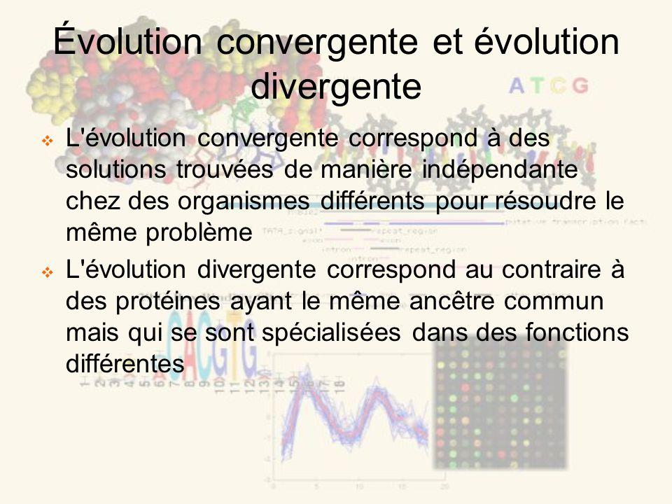 Évolution convergente et évolution divergente L évolution convergente correspond à des solutions trouvées de manière indépendante chez des organismes différents pour résoudre le même problème L évolution divergente correspond au contraire à des protéines ayant le même ancêtre commun mais qui se sont spécialisées dans des fonctions différentes