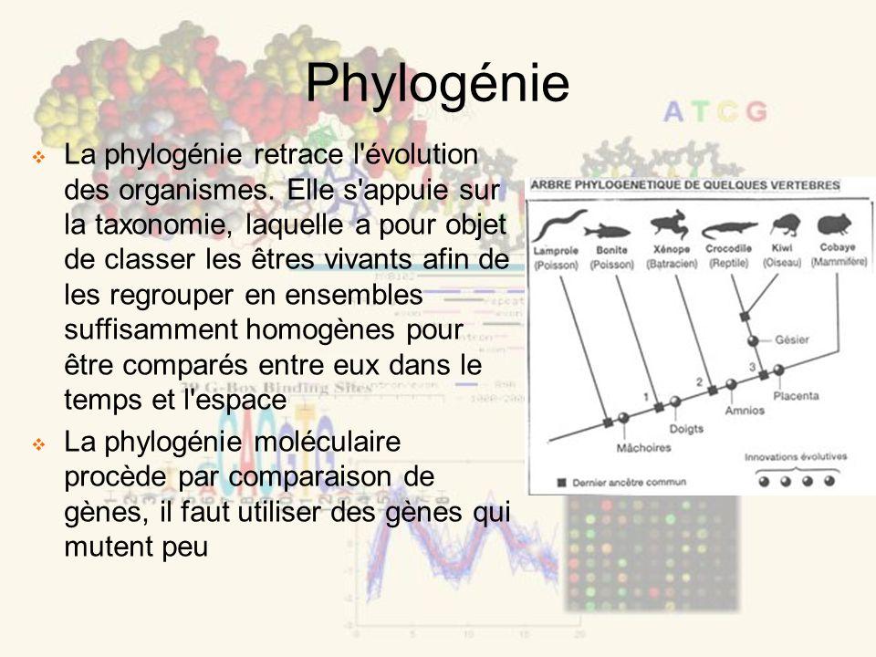Phylogénie La phylogénie retrace l'évolution des organismes. Elle s'appuie sur la taxonomie, laquelle a pour objet de classer les êtres vivants afin d