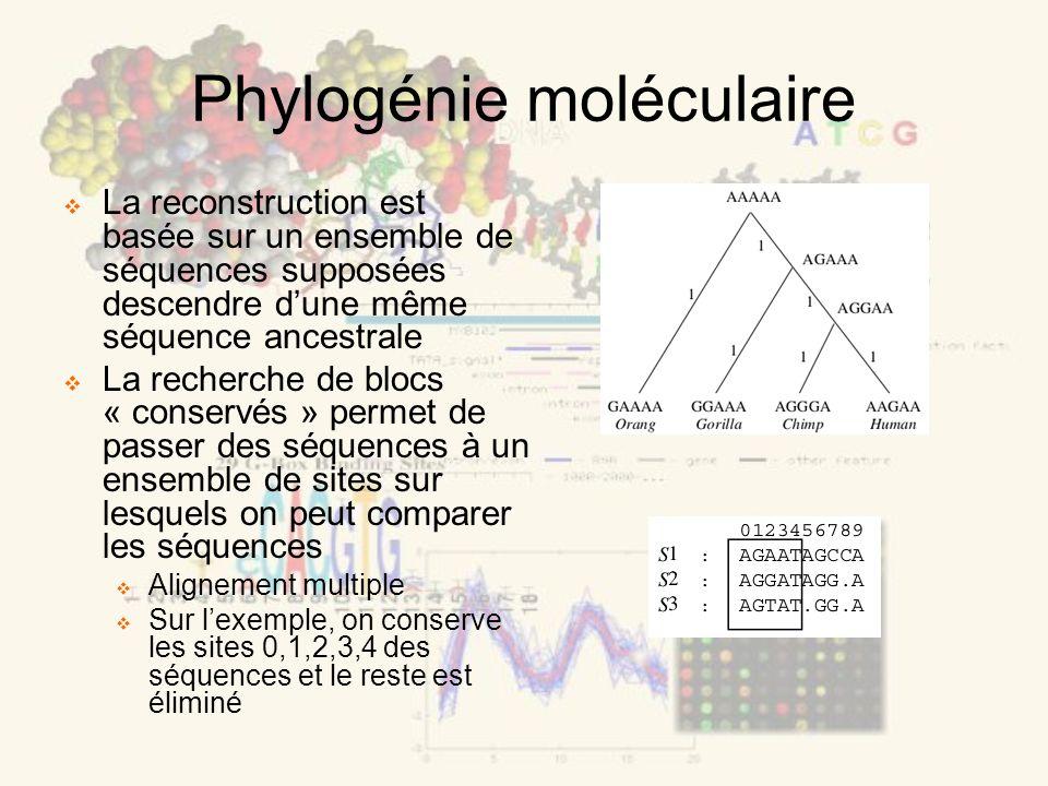 Phylogénie moléculaire La reconstruction est basée sur un ensemble de séquences supposées descendre dune même séquence ancestrale La recherche de blocs « conservés » permet de passer des séquences à un ensemble de sites sur lesquels on peut comparer les séquences Alignement multiple Sur lexemple, on conserve les sites 0,1,2,3,4 des séquences et le reste est éliminé