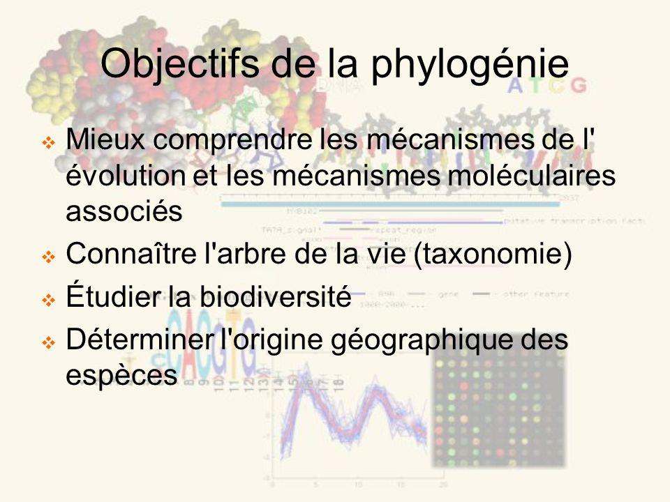 Objectifs de la phylogénie Mieux comprendre les mécanismes de l évolution et les mécanismes moléculaires associés Connaître l arbre de la vie (taxonomie) Étudier la biodiversité Déterminer l origine géographique des espèces