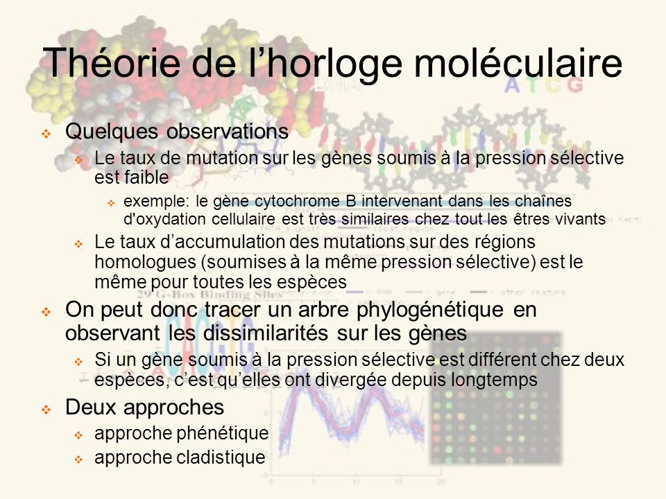 Théorie de lhorloge moléculaire Quelques observations Le taux de mutation sur les gènes soumis à la pression sélective est faible exemple: le gène cytochrome B intervenant dans les chaînes d oxydation cellulaire est très similaires chez tout les êtres vivants Le taux daccumulation des mutations sur des régions homologues (soumises à la même pression sélective) est le même pour toutes les espèces On peut donc tracer un arbre phylogénétique en observant les dissimilarités sur les gènes Si un gène soumis à la pression sélective est différent chez deux espèces, cest quelles ont divergée depuis longtemps Deux approches approche phénétique approche cladistique