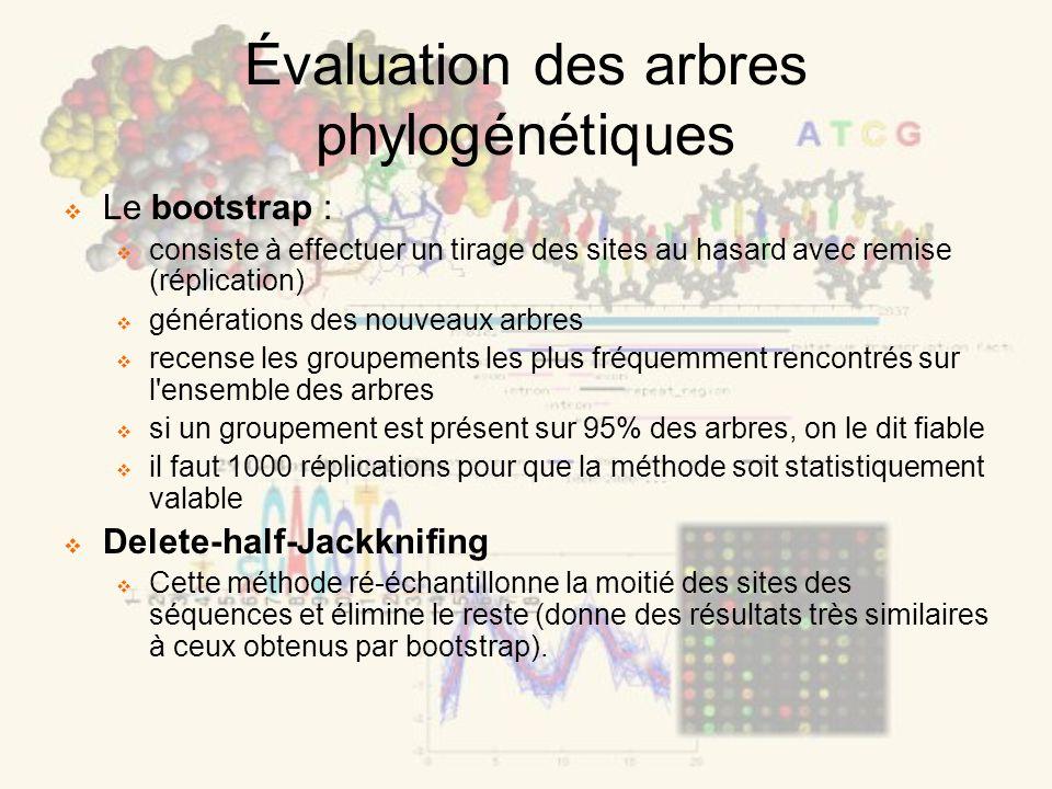 Évaluation des arbres phylogénétiques Le bootstrap : consiste à effectuer un tirage des sites au hasard avec remise (réplication) générations des nouv