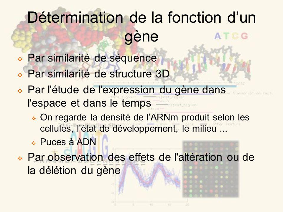 Détermination de la fonction dun gène Par similarité de séquence Par similarité de structure 3D Par l étude de l expression du gène dans l espace et dans le temps On regarde la densité de lARNm produit selon les cellules, létat de développement, le milieu...