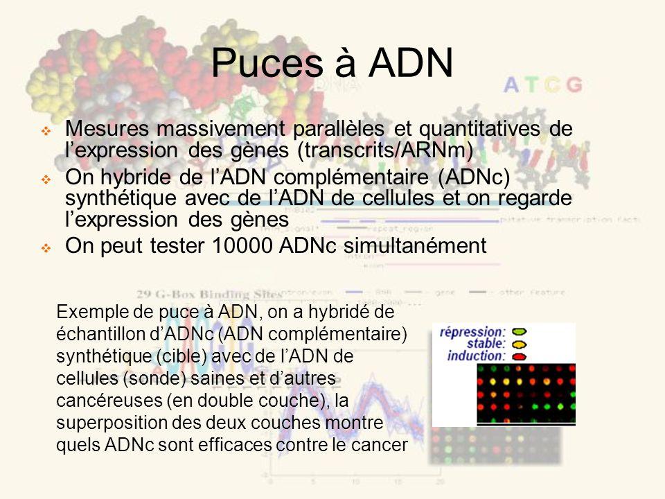 Puces à ADN Mesures massivement parallèles et quantitatives de lexpression des gènes (transcrits/ARNm) On hybride de lADN complémentaire (ADNc) synthétique avec de lADN de cellules et on regarde lexpression des gènes On peut tester 10000 ADNc simultanément Exemple de puce à ADN, on a hybridé de échantillon dADNc (ADN complémentaire) synthétique (cible) avec de lADN de cellules (sonde) saines et dautres cancéreuses (en double couche), la superposition des deux couches montre quels ADNc sont efficaces contre le cancer