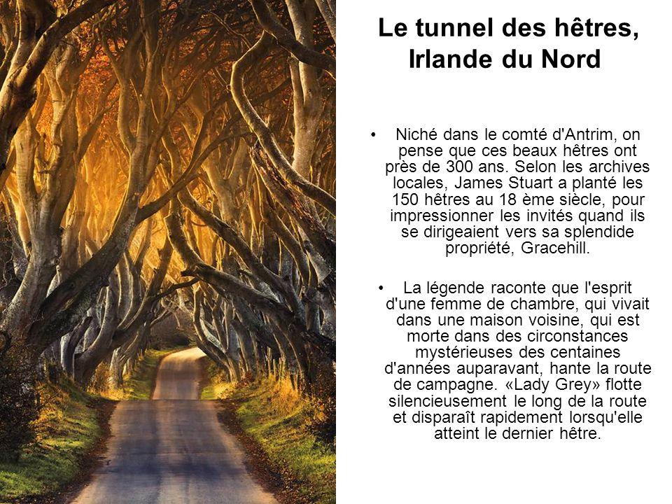 Le tunnel des hêtres, Irlande du Nord Niché dans le comté d'Antrim, on pense que ces beaux hêtres ont près de 300 ans. Selon les archives locales, Jam