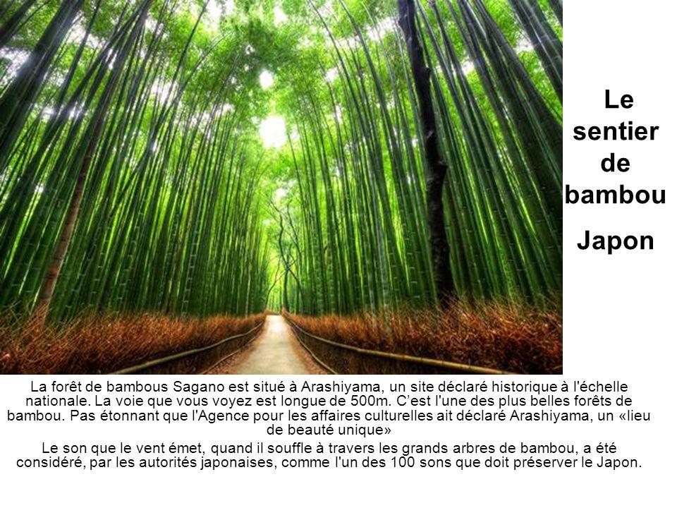 Le sentier de bambou Japon La forêt de bambous Sagano est situé à Arashiyama, un site déclaré historique à l'échelle nationale. La voie que vous voyez