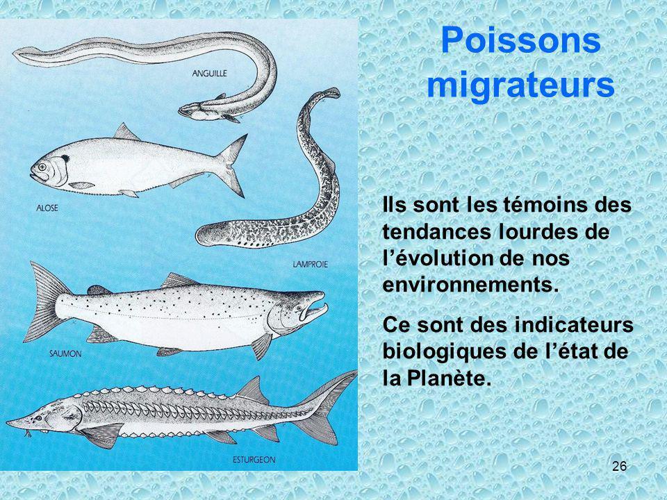 26 Poissons migrateurs Ils sont les témoins des tendances lourdes de lévolution de nos environnements. Ce sont des indicateurs biologiques de létat de