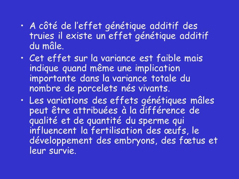 A côté de leffet génétique additif des truies il existe un effet génétique additif du mâle.