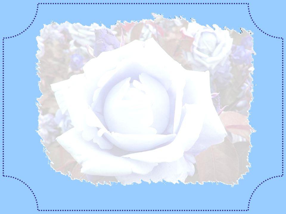 Vers la terre à présent se tourne, ensorceleur : Il a pris cette fois la forme dune fleur, Une rose de rêve, idéale et sublime, Tel un morceau dazur é