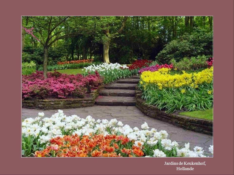 Jardins de Keukenhof, Hollande