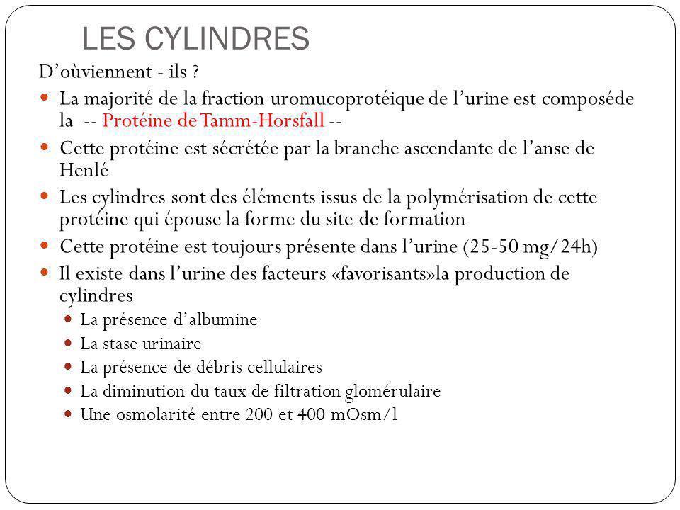 LES CYLINDRES Doùviennent - ils ? La majorité de la fraction uromucoprotéique de lurine est composéde la -- Protéine de Tamm-Horsfall -- Cette protéin