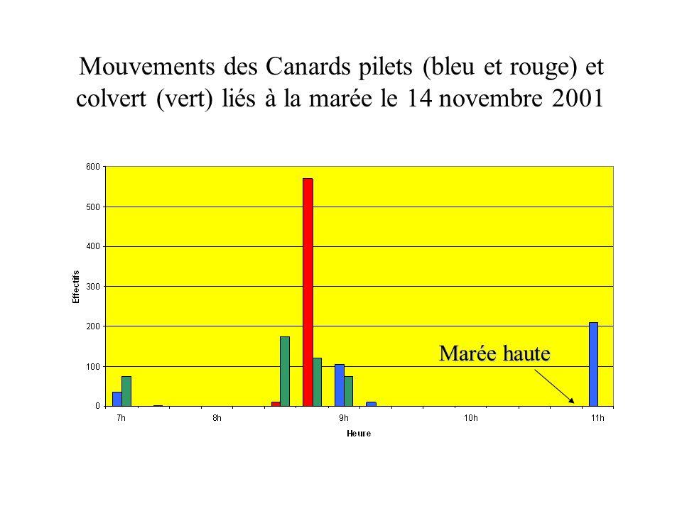 Mouvements des Canards pilets (bleu et rouge) et colvert (vert) liés à la marée le 14 novembre 2001 Marée haute