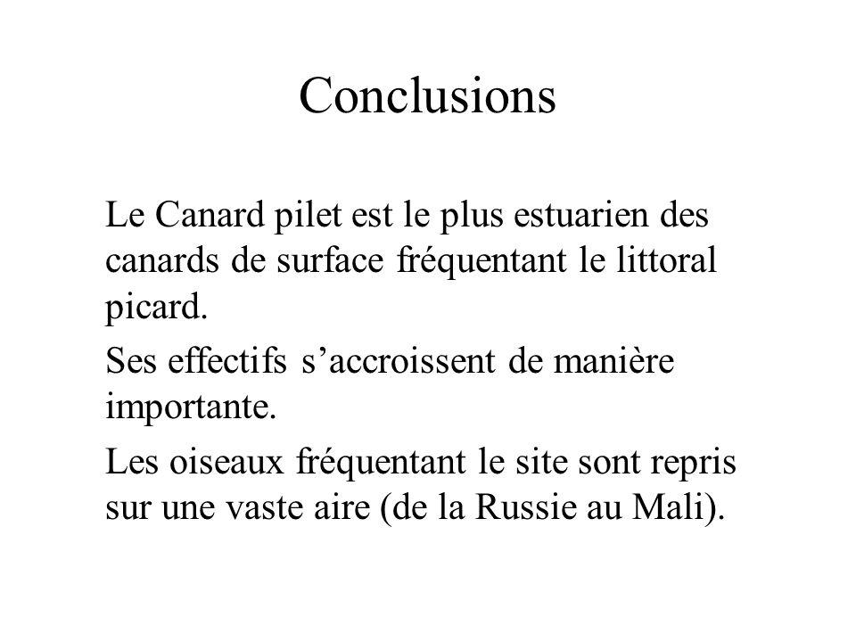 Conclusions Le Canard pilet est le plus estuarien des canards de surface fréquentant le littoral picard.