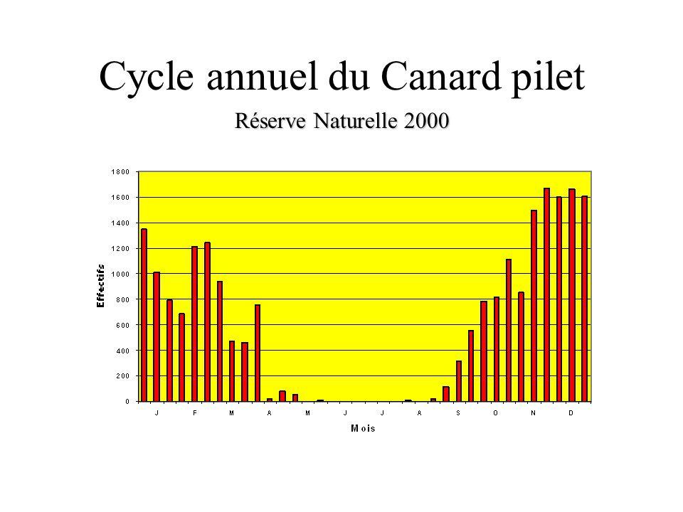 Cycle annuel du Canard pilet Réserve Naturelle 2000 Réserve Naturelle 2000